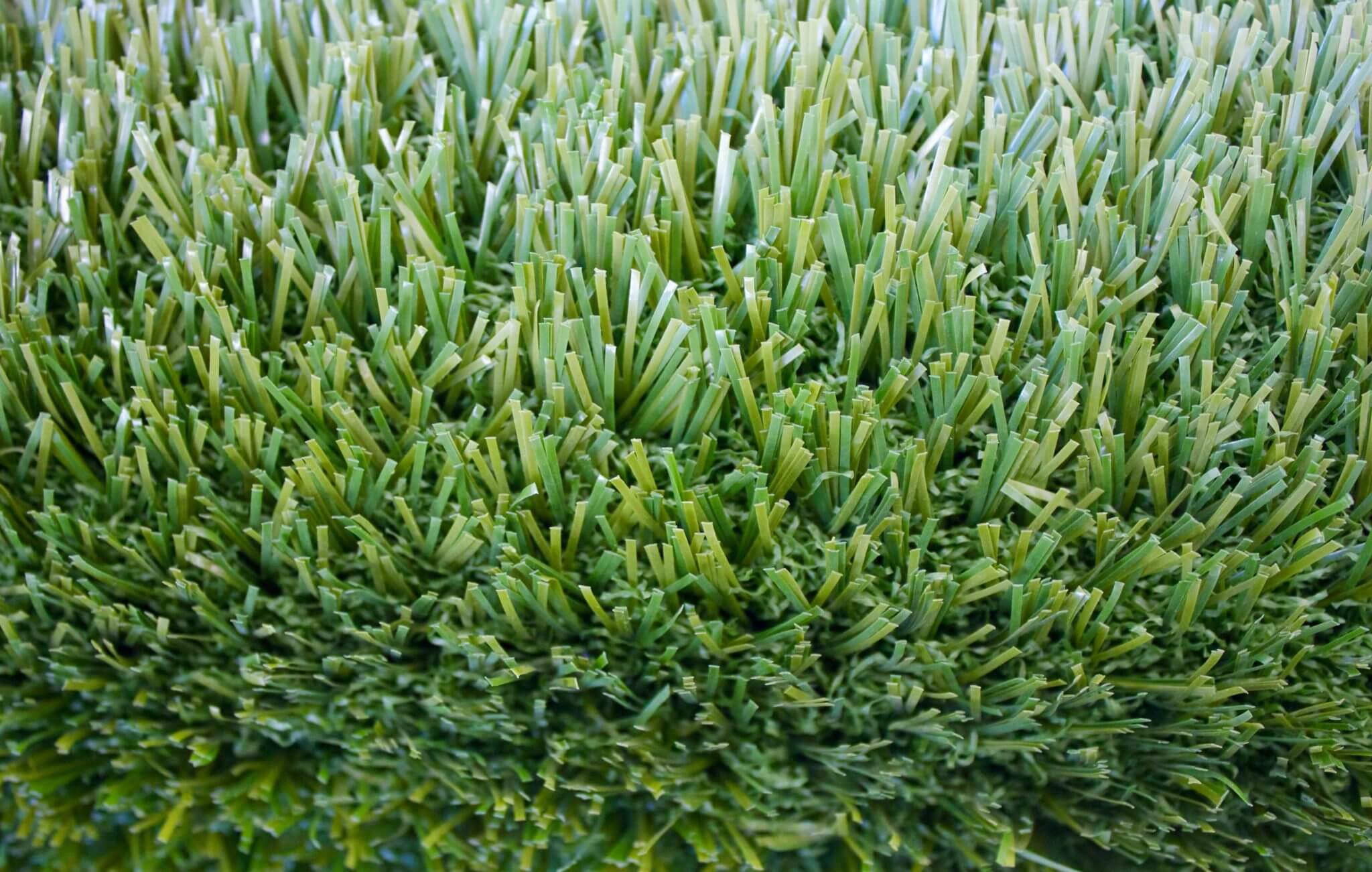 PetGrass-top view of green thatch