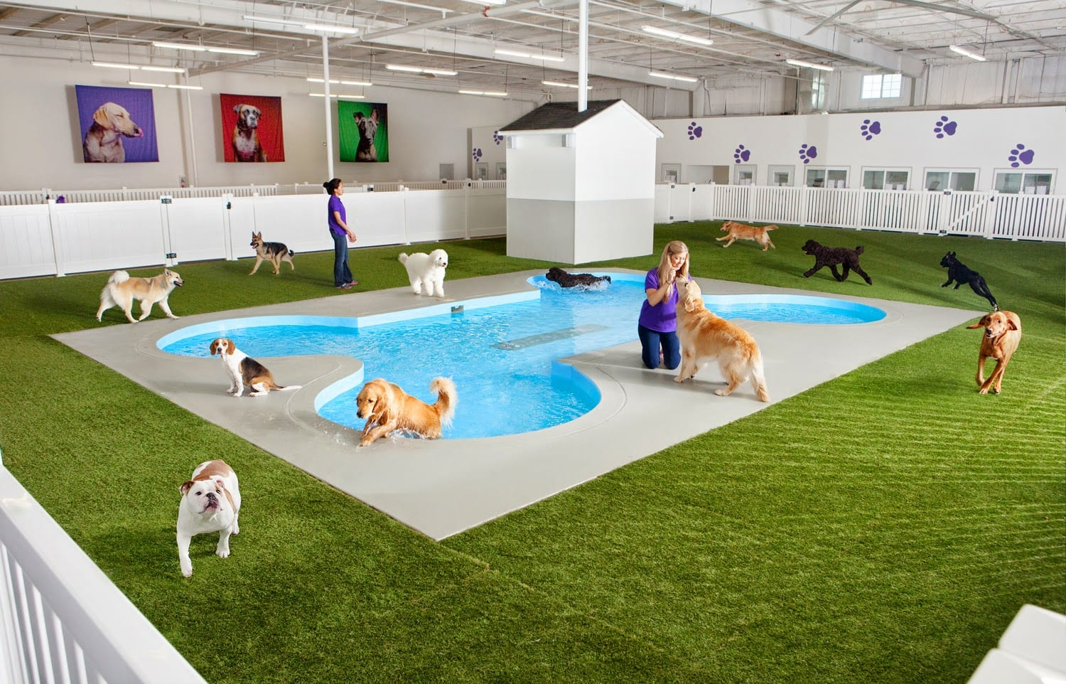 Many dogs playing in the pool and on the PetGrass turf at Midway's Paradise 4 Paws