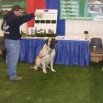 Big dog testing out PetGrass at our booth at Pet Expo