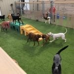 Camp Bow Wow Kemah Texas PetGrass PODs installation with dogs playing on it.